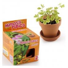 Mini zahrádka - Veselý květináč - Mimoza