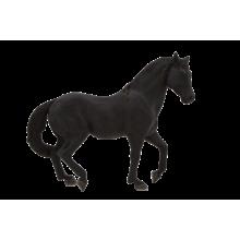 Mojo Animal Planet Andaluský černý kůň