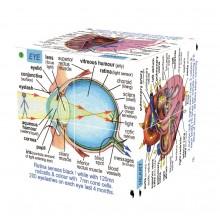 Zoobookoo Kniha v kostce Lidské tělo