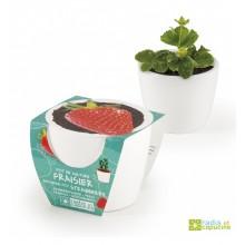 Mini zahrádka - Mini květináč Ceramic s jahodami