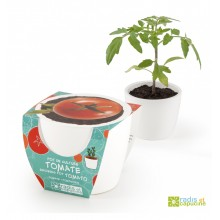 Mini zahrádka - Mini květináč Ceramic s cherry rajčáty