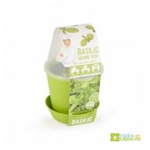 Mini zahrádka - Květináč Bell s bazalkou