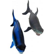 Žralok velký